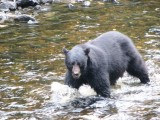 Program Work and Travel - Piotrek i Wojtek - Alaska