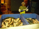 Work and Travel - Global Seafoods, Alaska, USA - Kateryna - 2009