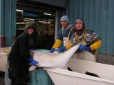 Trident Seafoods - Work and Travel 2009